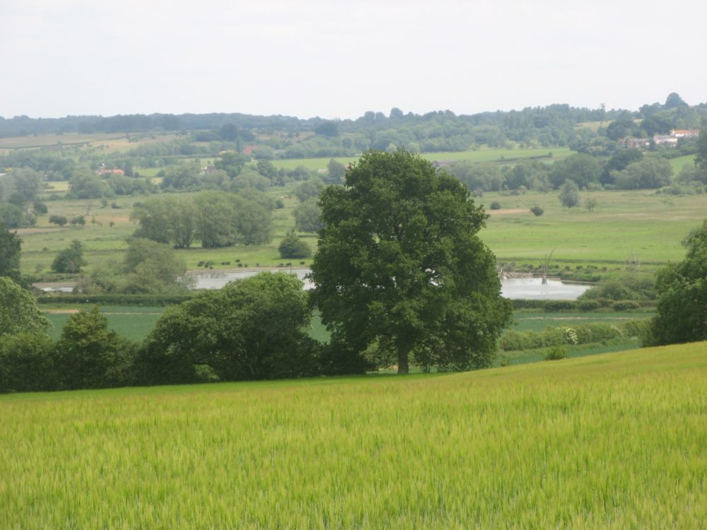 Landscape view of a field with trees