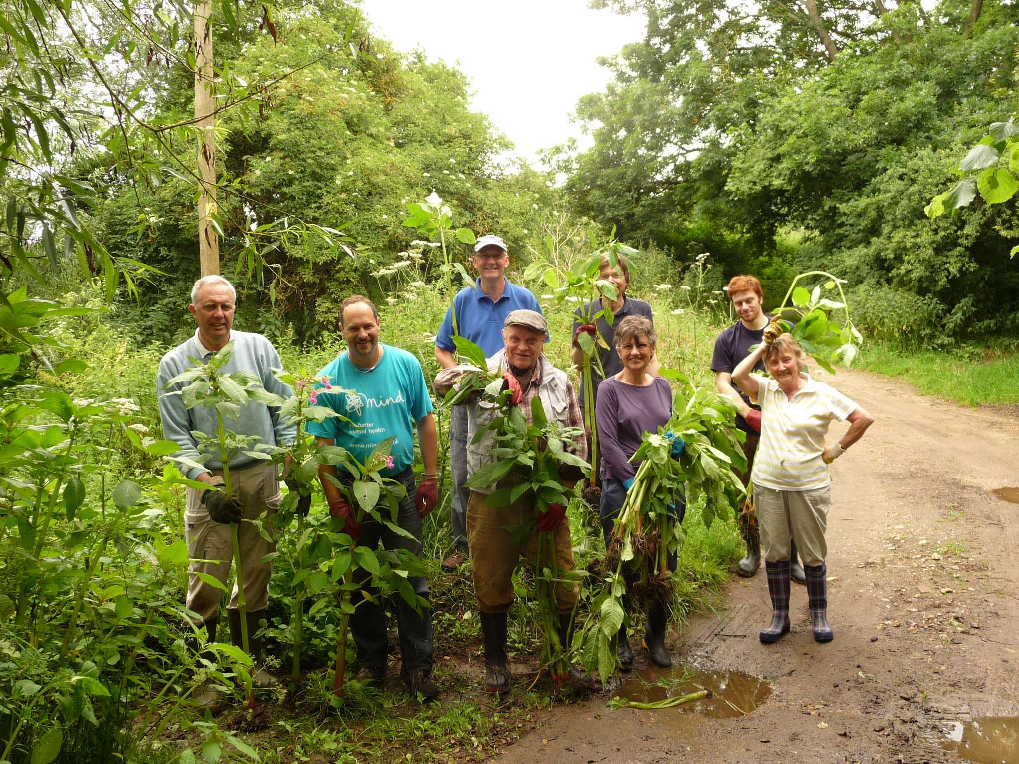 Volunteers clearing Himalayan Balsam