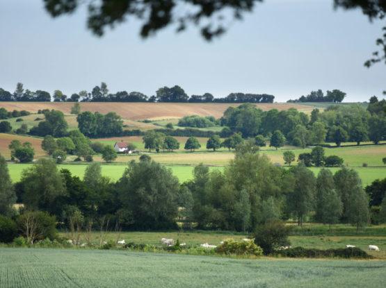 Landscape view of fields